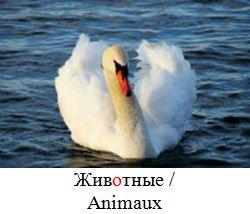 Animaux en russe