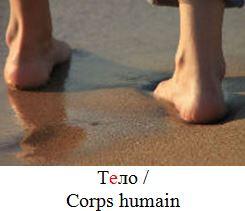 Corps humain en russe